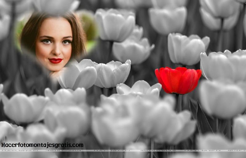 Fotomontaje con tulipanes